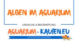 algen-im-aquarium